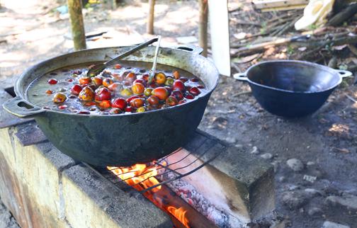 Pejibaye Fruit